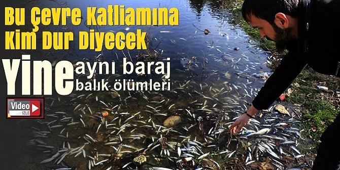 Karabük'te ki balık ölümleri yine korkuttu