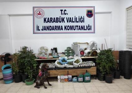Karabük'te 149 kök kenevir ele geçirilirken, hırsızlık zanlısı 3 kişi tutuklandı